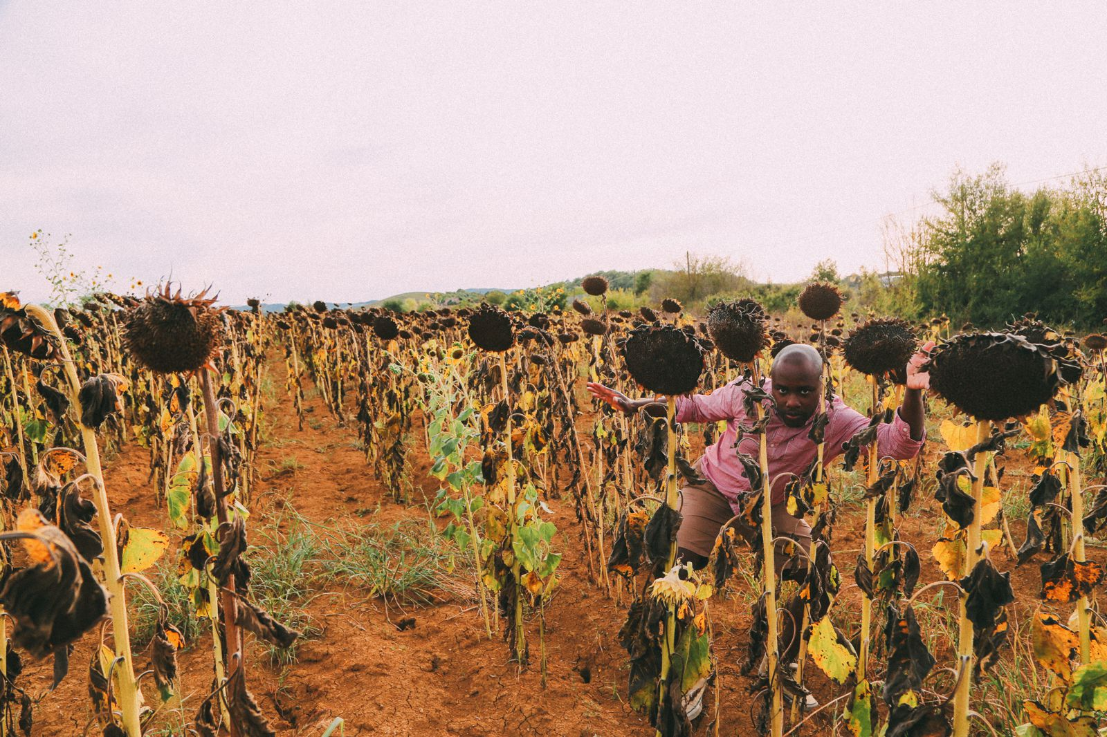 Sunflower Fields... (11)
