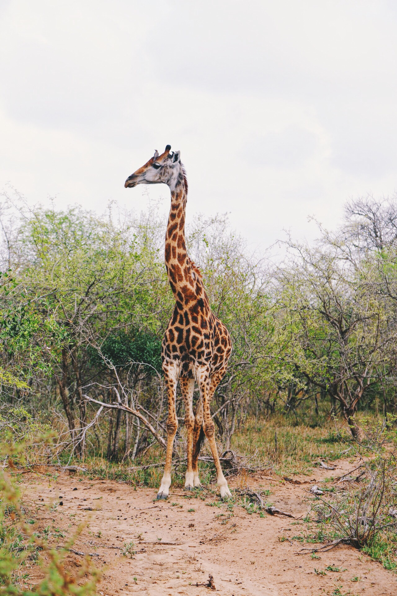 Safari In South Africa - A Photo Diary (8)