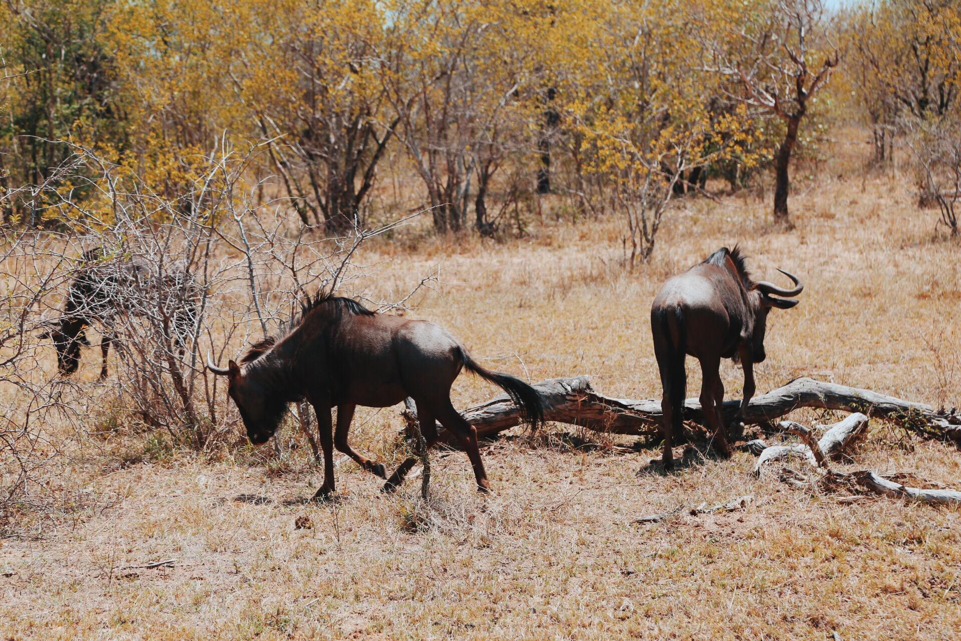 Safari In South Africa - A Photo Diary (10)