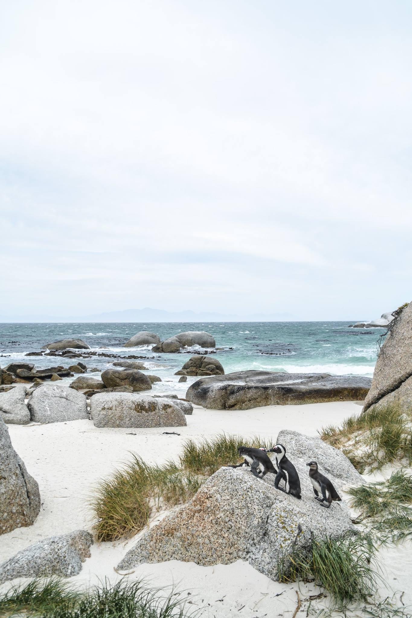 6 Breathtaking Experiences You Must Have Just Outside Of Cape Town, South Africa (11)