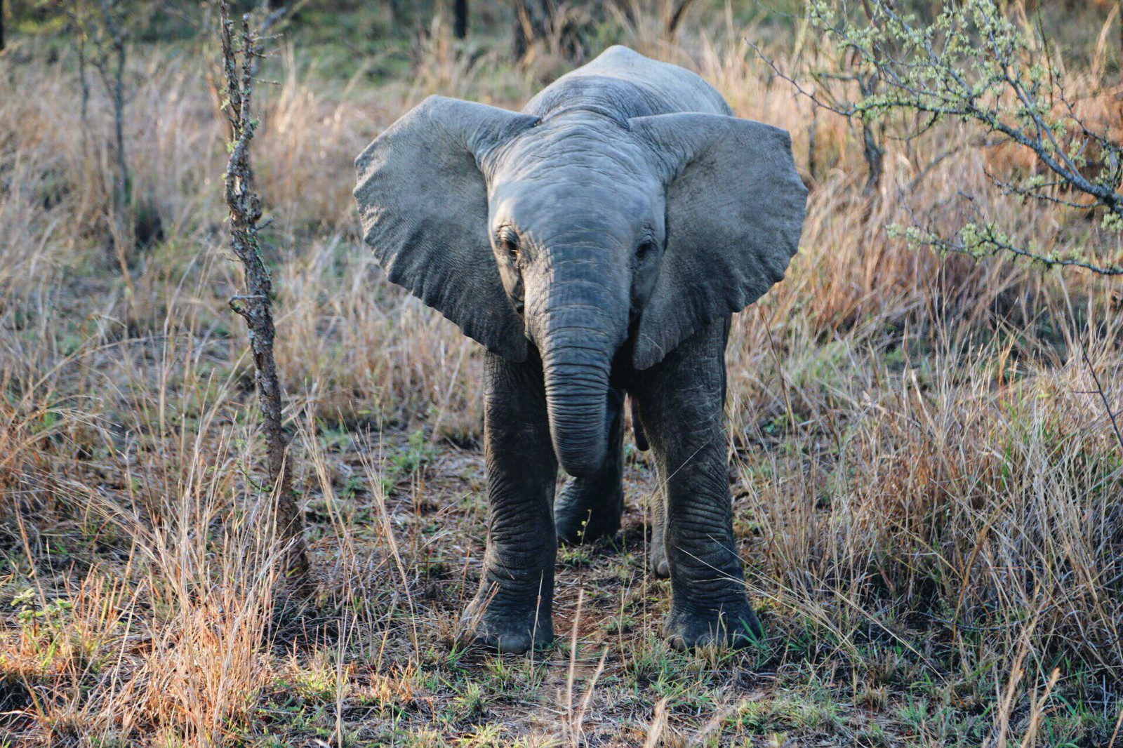 Some Really Important Things You Need To Know About Poaching In Africa (3)