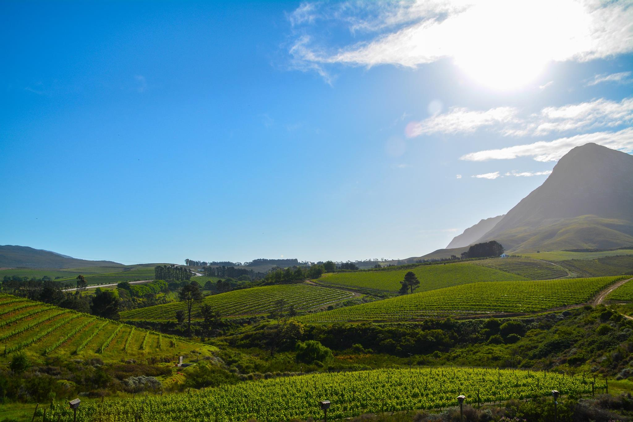 6 Breathtaking Experiences You Must Have Just Outside Of Cape Town, South Africa (3)