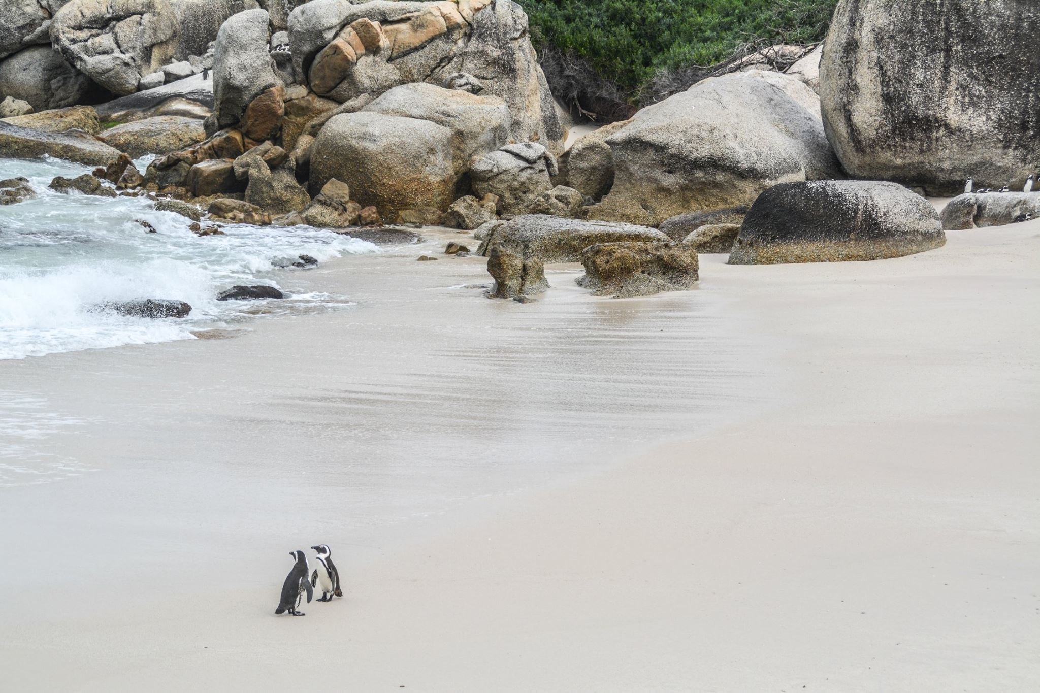 6 Breathtaking Experiences You Must Have Just Outside Of Cape Town, South Africa (8)