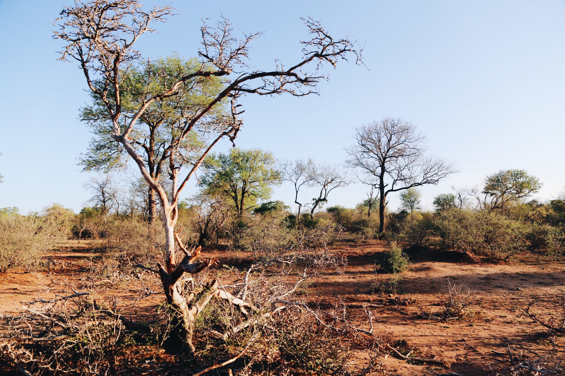 Safari In South Africa - A Photo Diary (17)