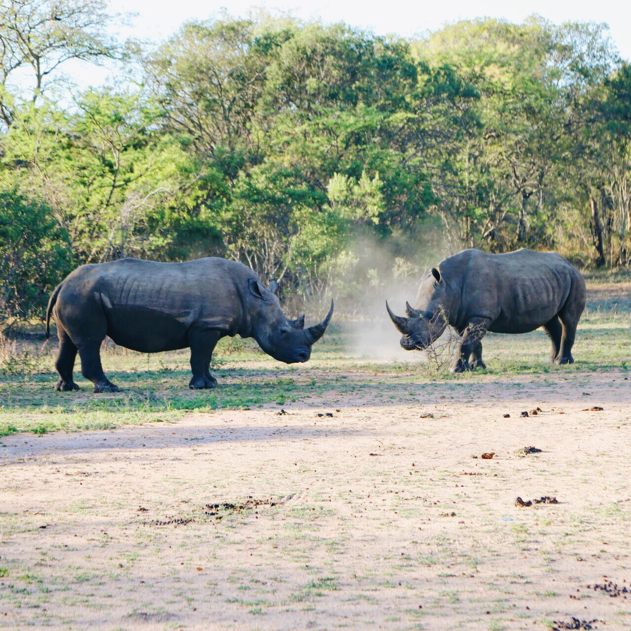 Safari In South Africa - A Photo Diary (12)