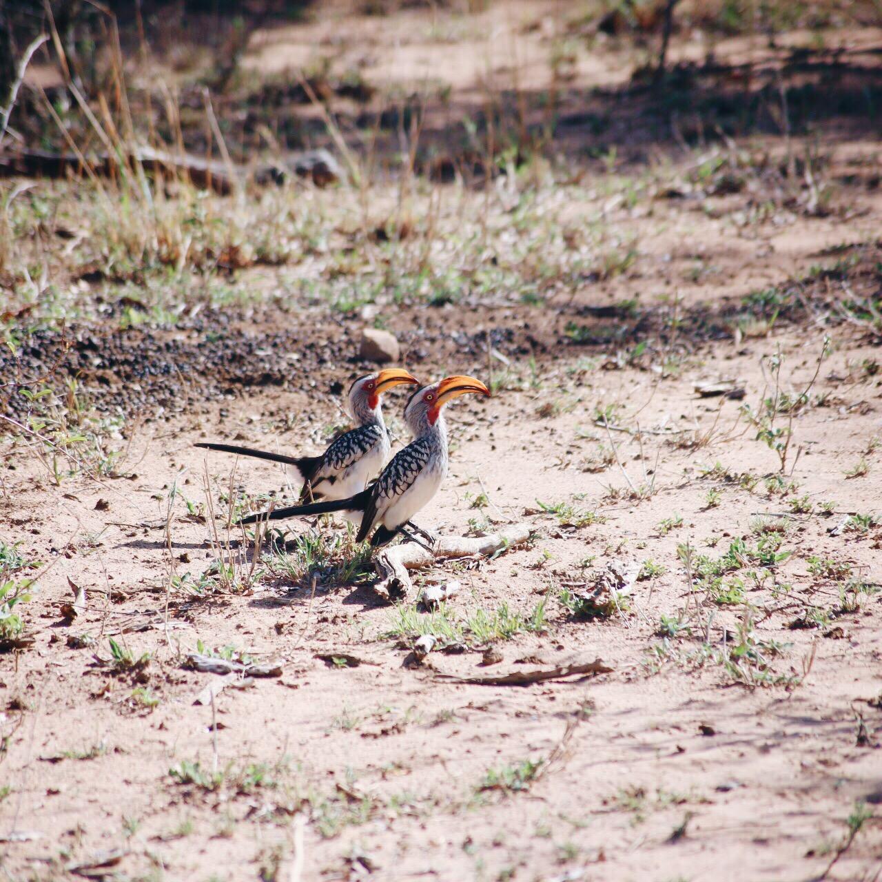 Safari In South Africa - A Photo Diary (9)