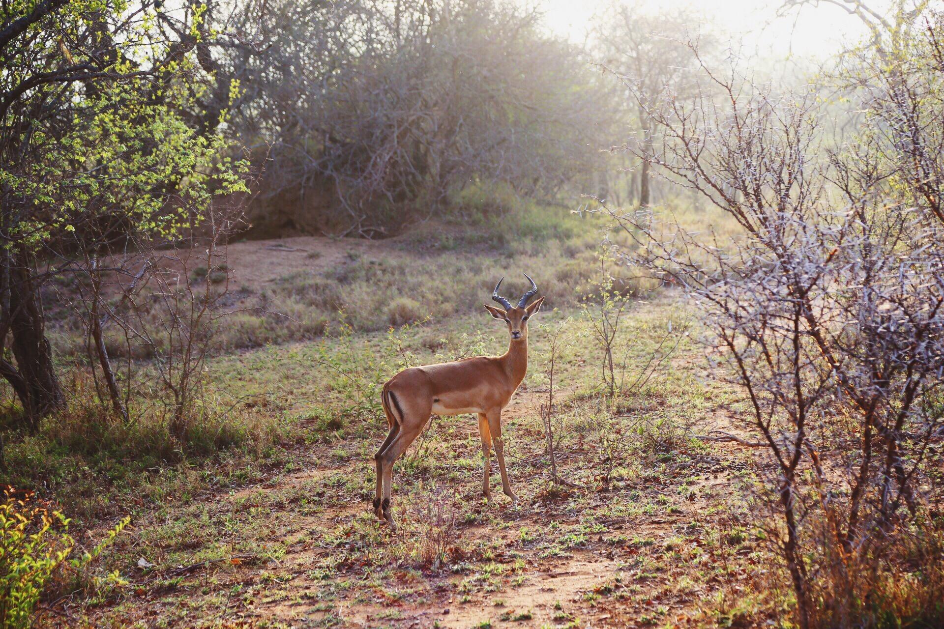 Safari In South Africa - A Photo Diary (16)