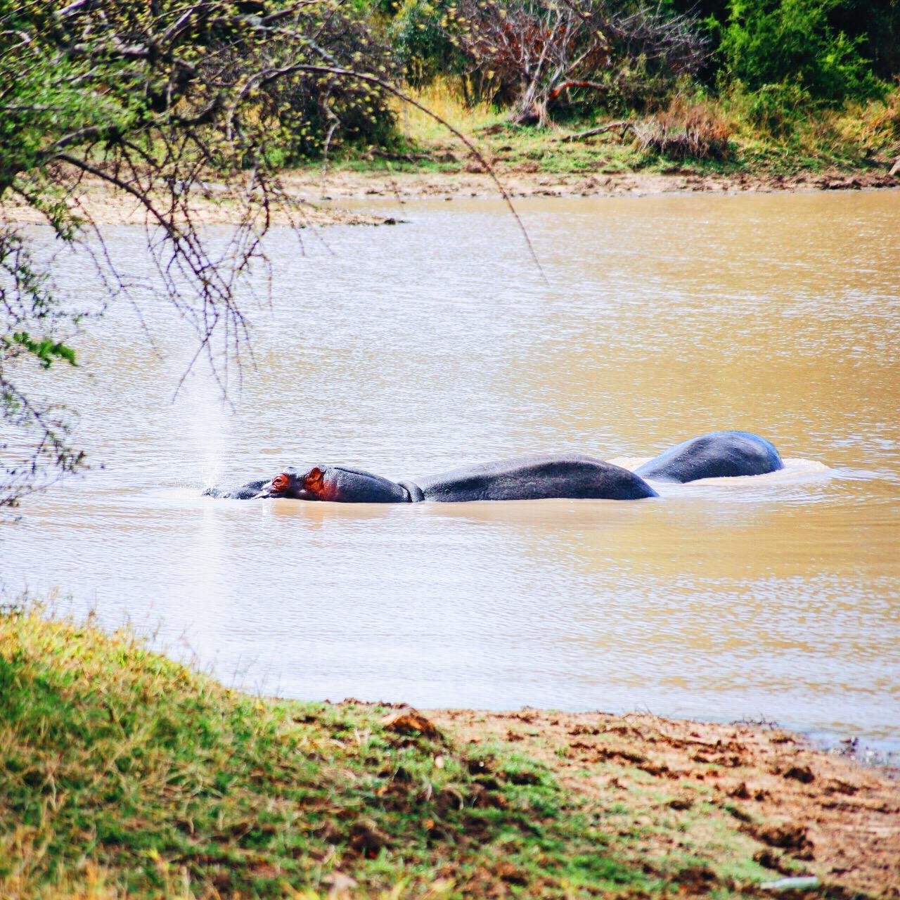 Safari In South Africa - A Photo Diary (19)