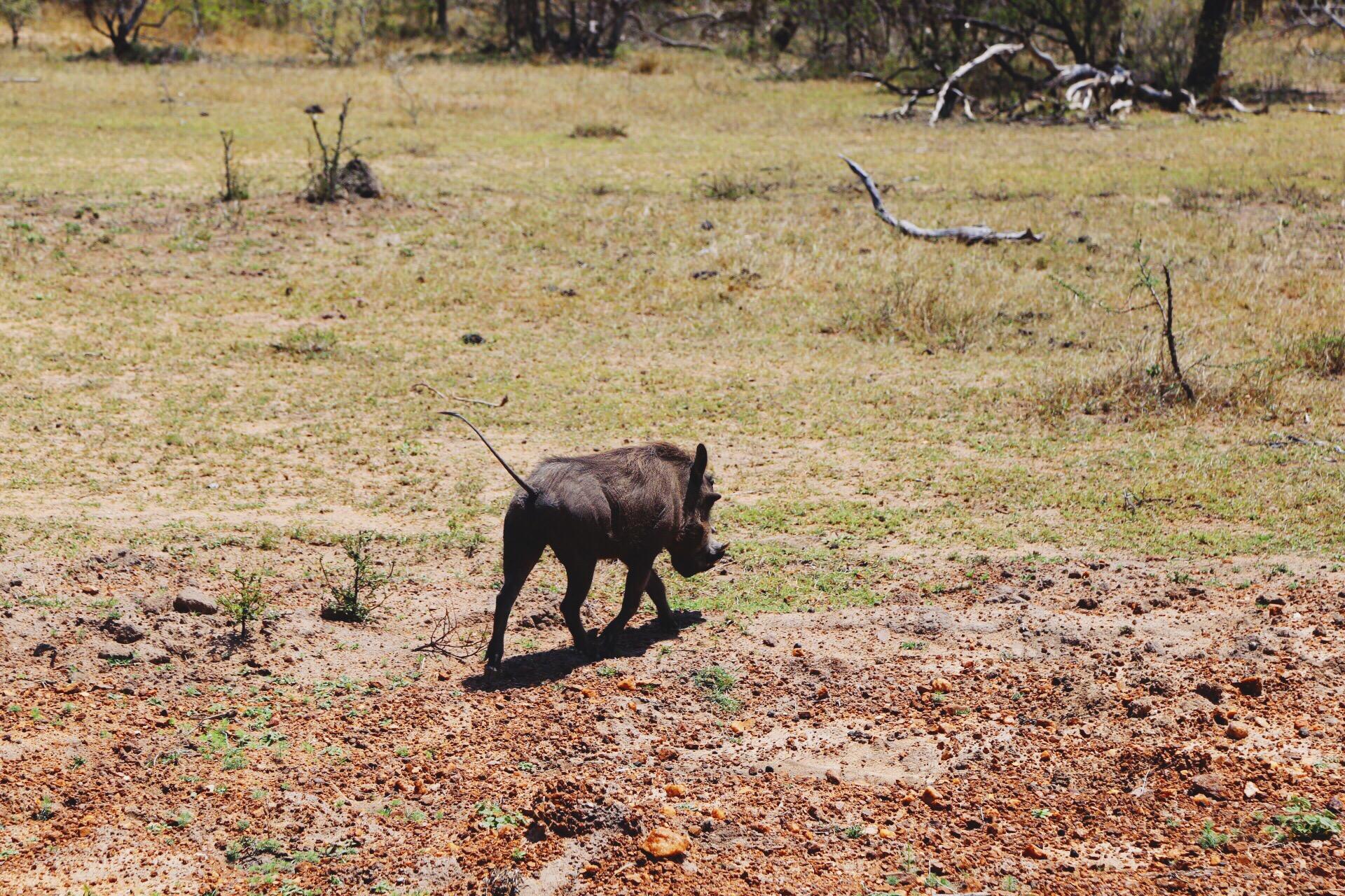 Safari In South Africa - A Photo Diary (11)