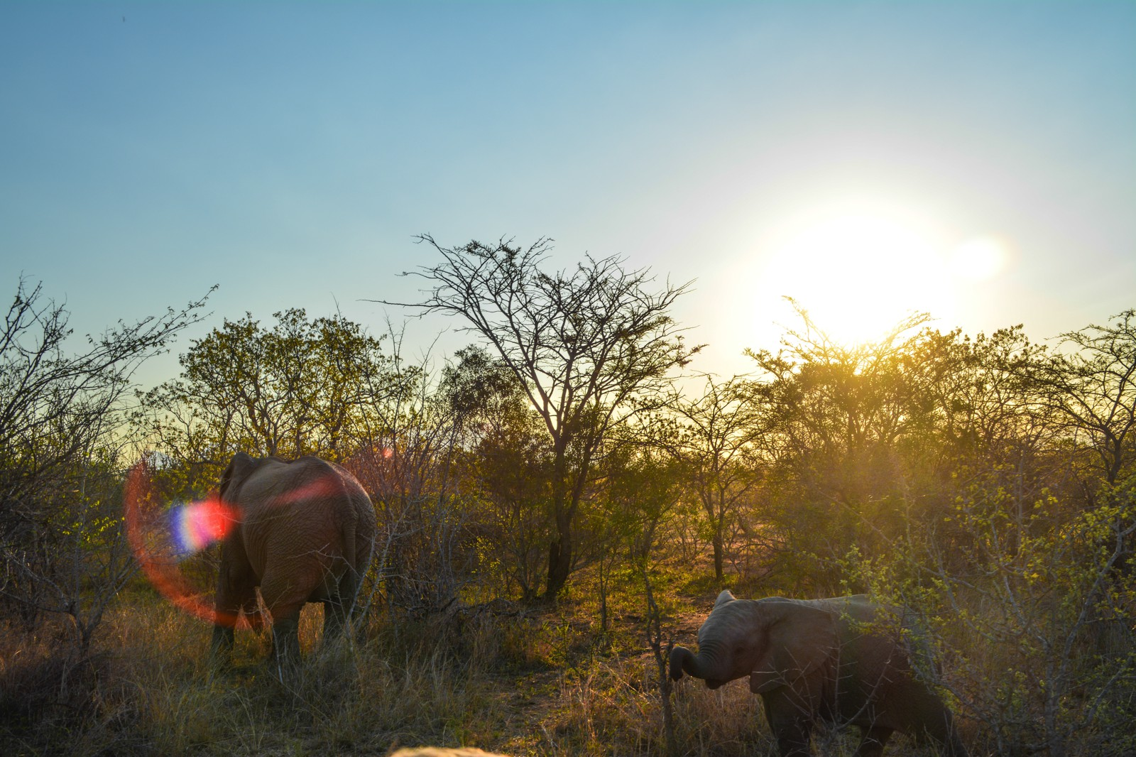 Some Really Important Things You Need To Know About Poaching In Africa (18)