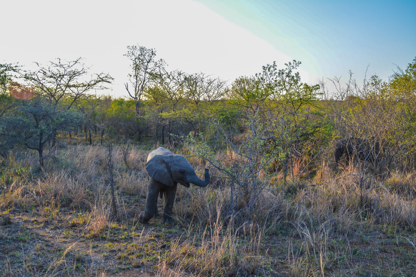 Some Really Important Things You Need To Know About Poaching In Africa (19)