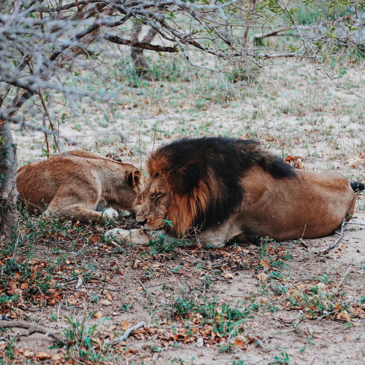 Safari In South Africa - A Photo Diary (5)