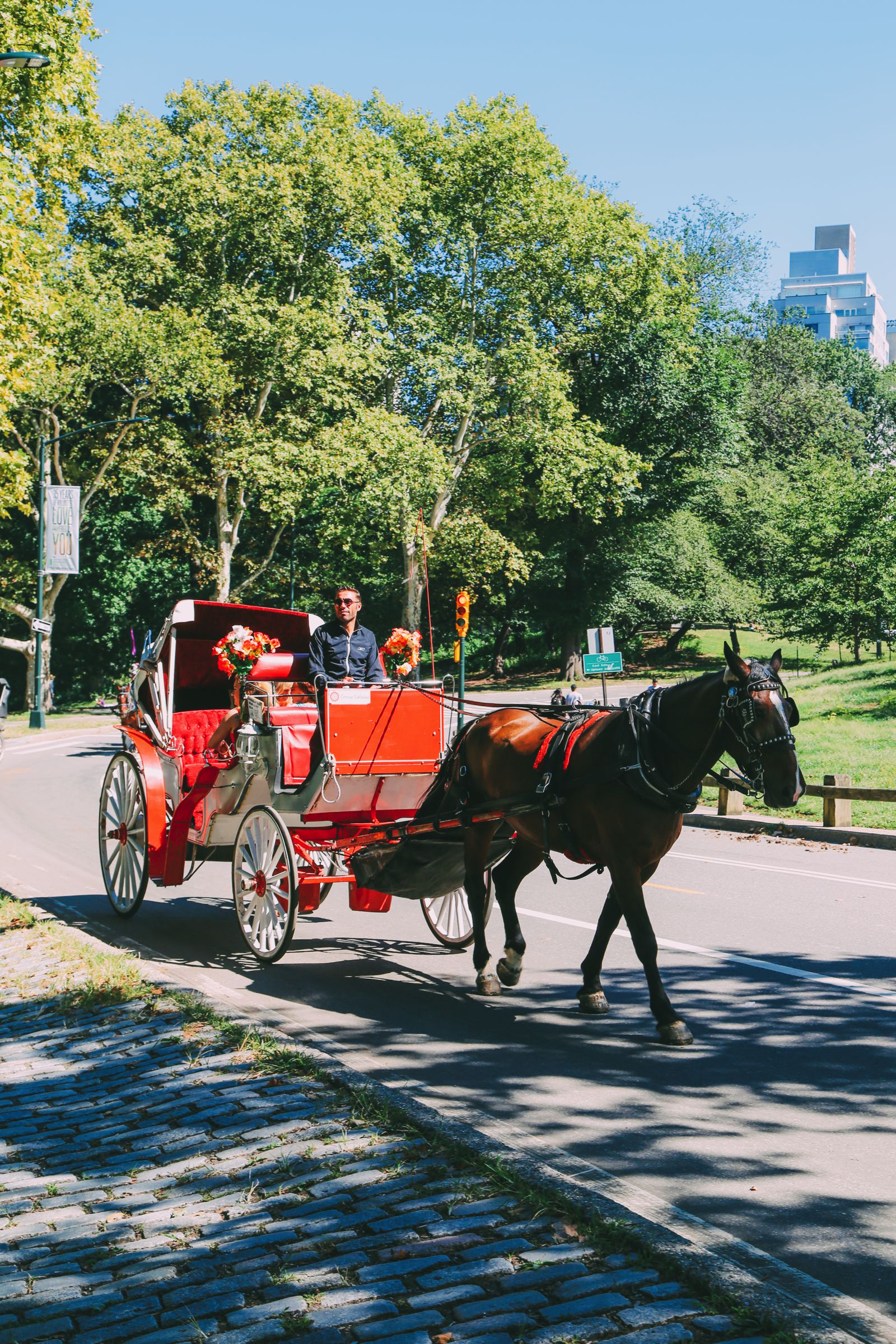 Central Park - A New York Photo Diary (26)