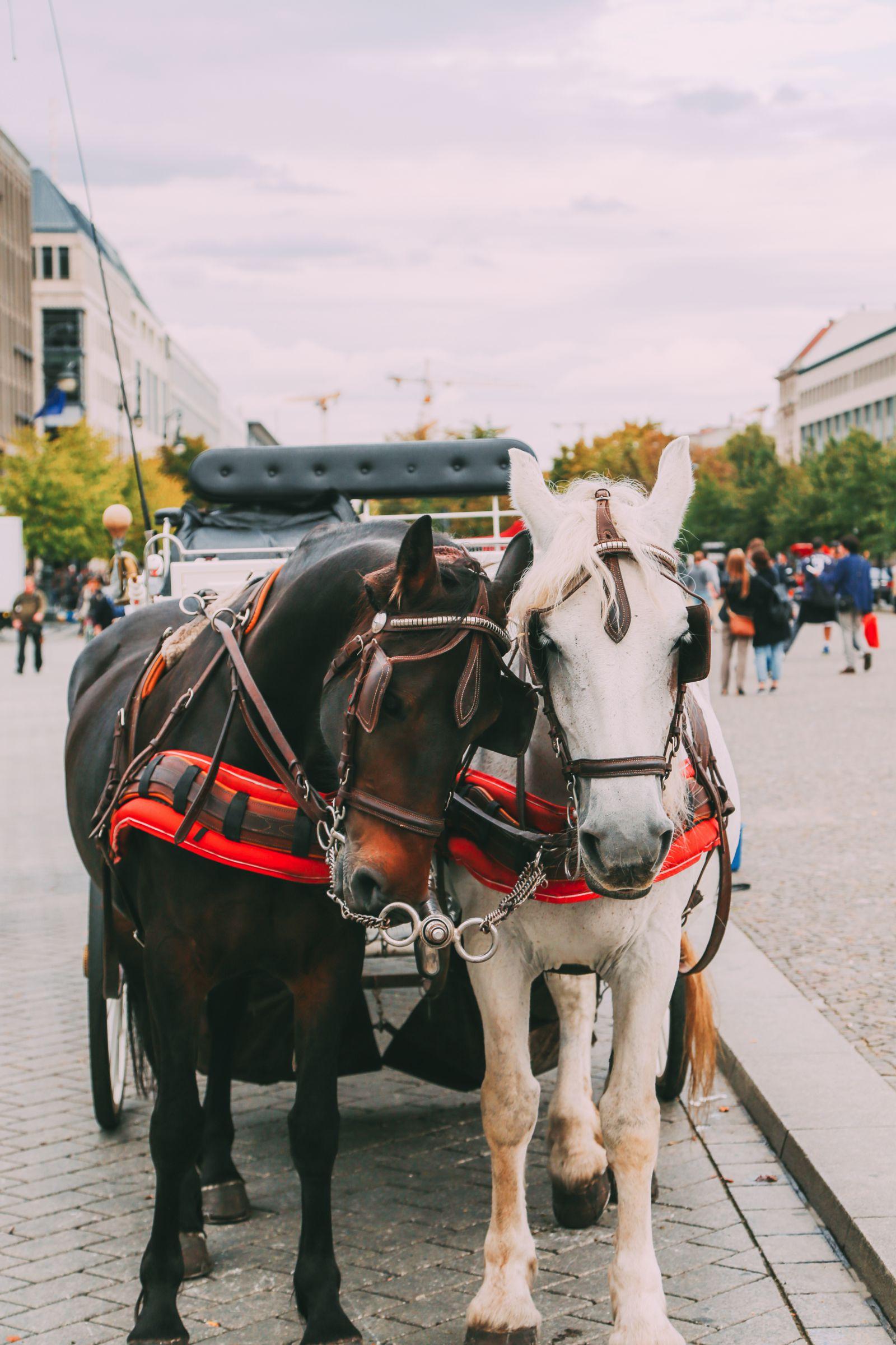 Sightseeing In Berlin, Germany - Part 2 (22)