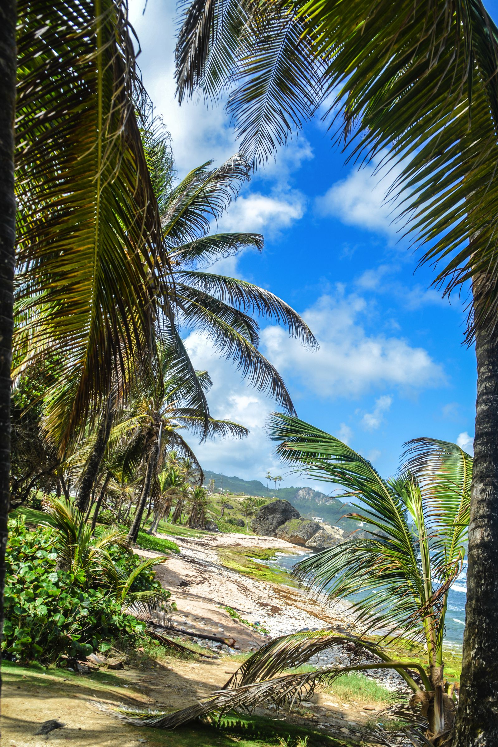 Exploring The Unspoilt Beauty of East Barbados (8)