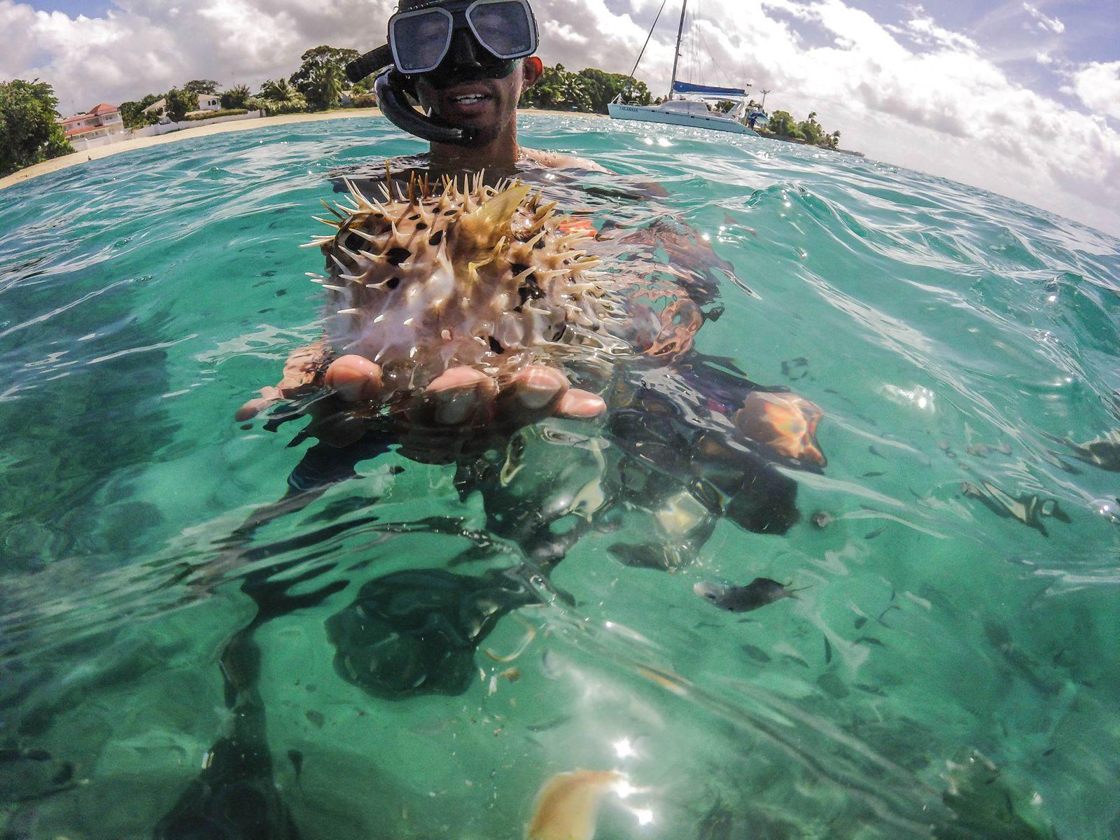 Sailing In Barbados - Swimming With Turtles and Puffer Fish (27)