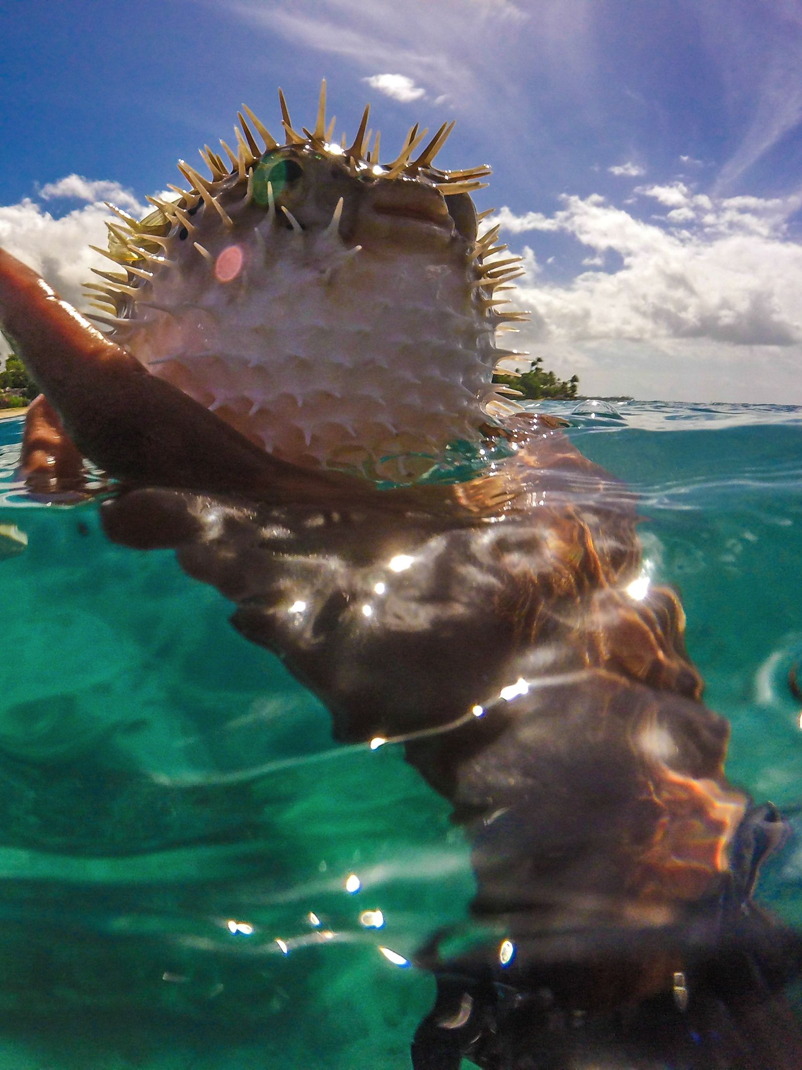 Sailing In Barbados - Swimming With Turtles and Puffer Fish (29)