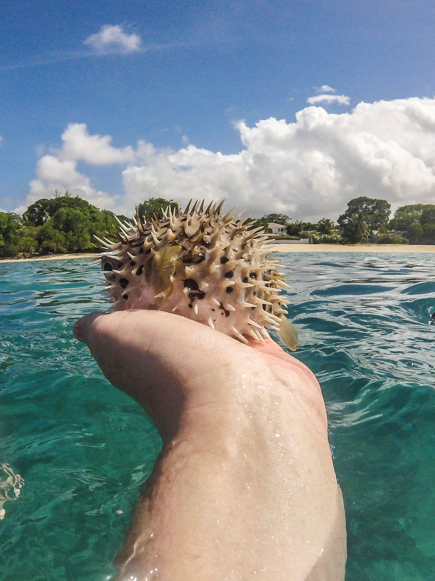 Sailing In Barbados - Swimming With Turtles and Puffer Fish (30)
