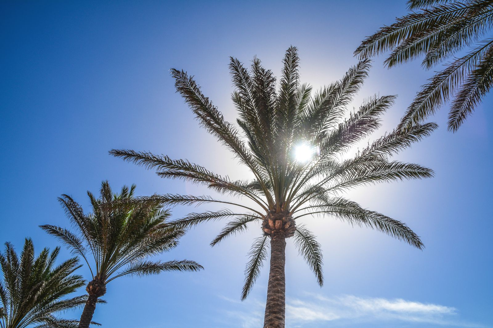 Exploring The Natural Beauty of Fuerteventura (10)