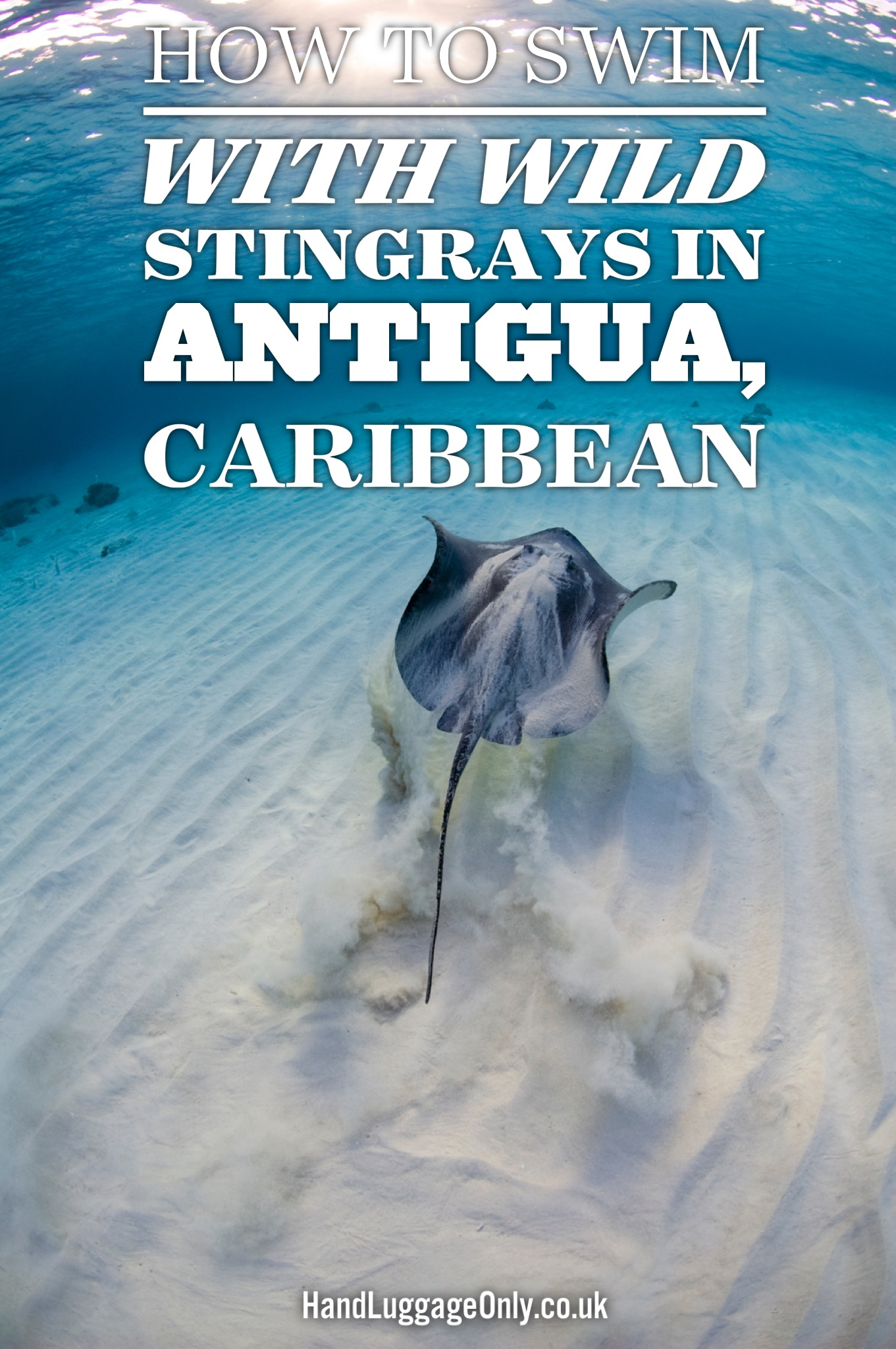 How To Swim With Wild Stingrays In Antigua In The Caribbean