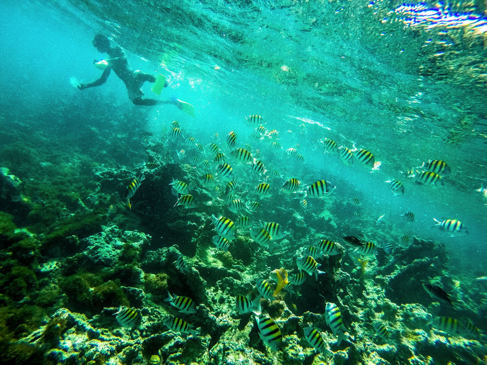 Snorkelling In Antigua - The Photo Diary (8)