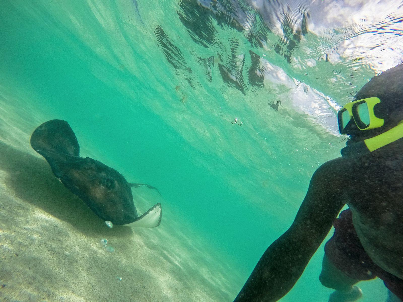 How To Swim With Wild Stingrays In Antigua (37)