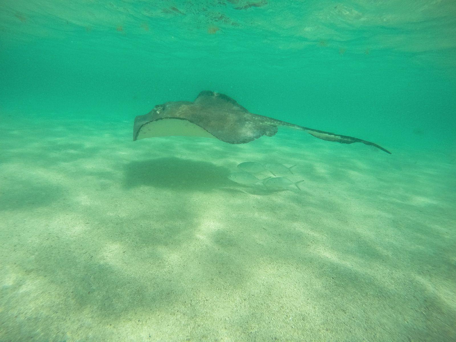 How To Swim With Wild Stingrays In Antigua (36)