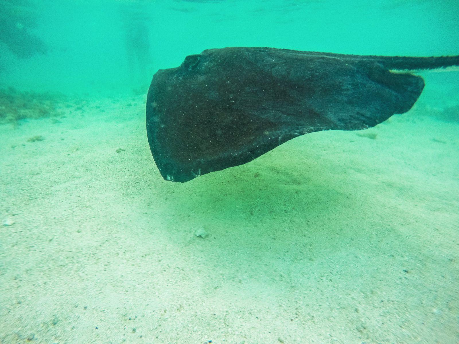 How To Swim With Wild Stingrays In Antigua (32)