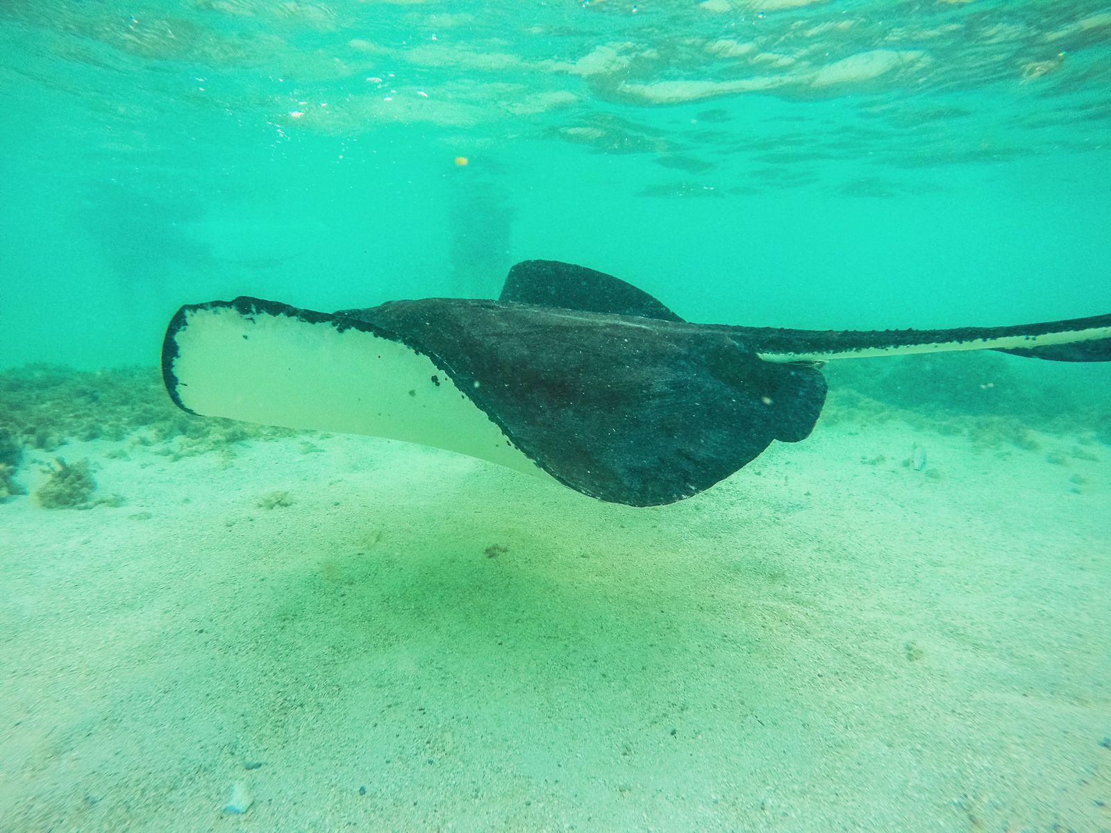 How To Swim With Wild Stingrays In Antigua (30)