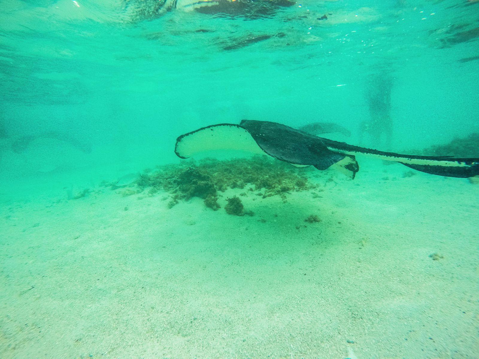 How To Swim With Wild Stingrays In Antigua (28)
