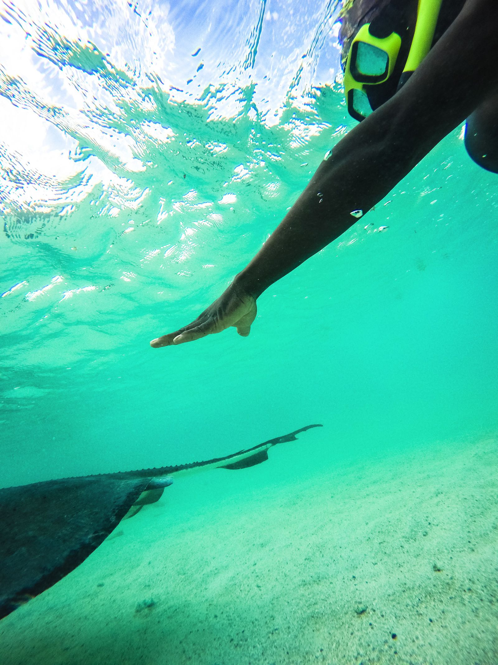 How To Swim With Wild Stingrays In Antigua (27)