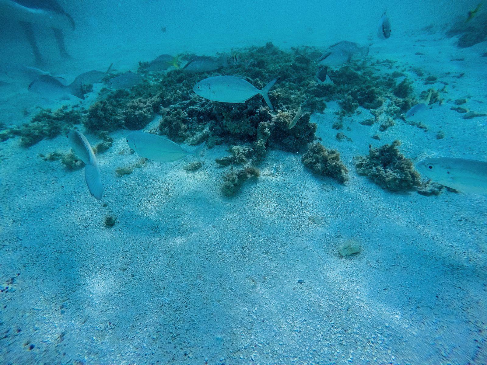 How To Swim With Wild Stingrays In Antigua (24)