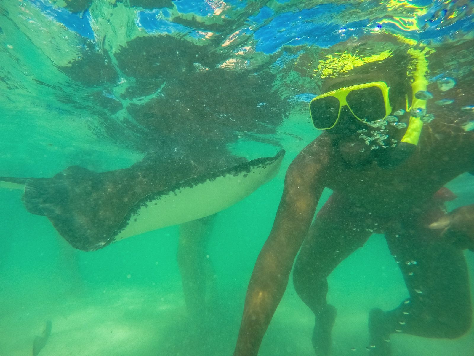 How To Swim With Wild Stingrays In Antigua (22)