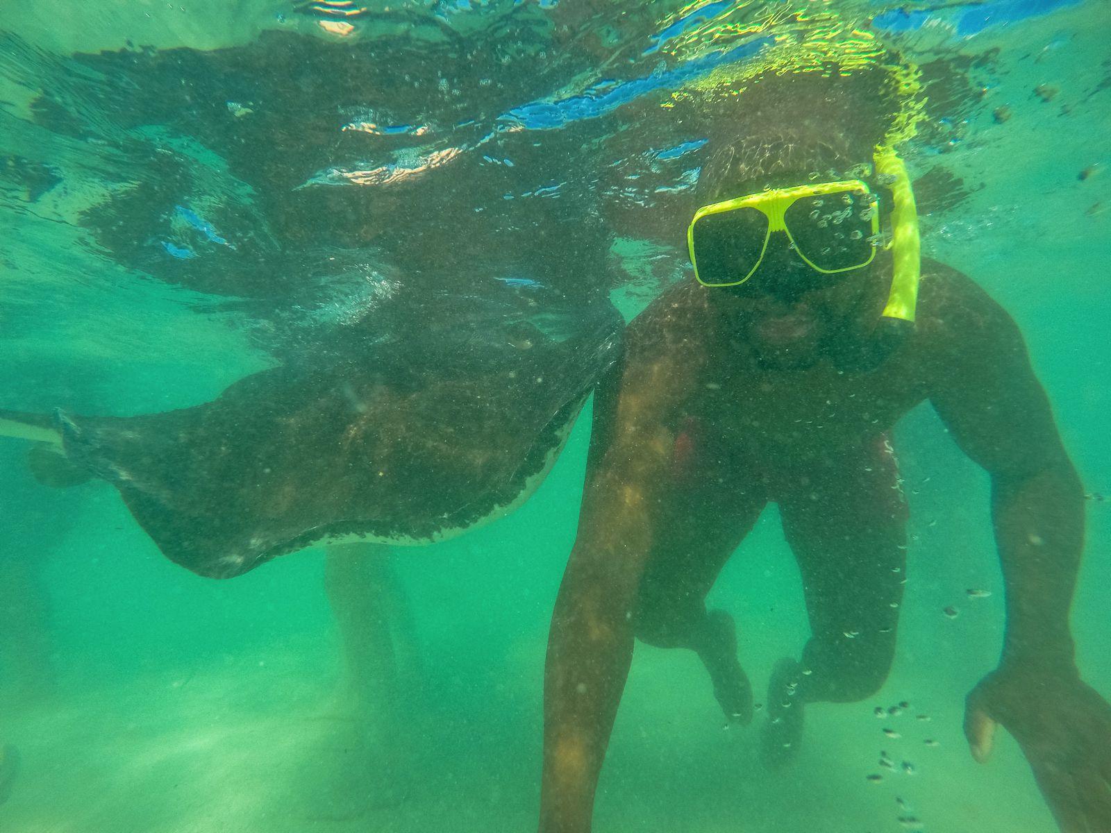 How To Swim With Wild Stingrays In Antigua (21)
