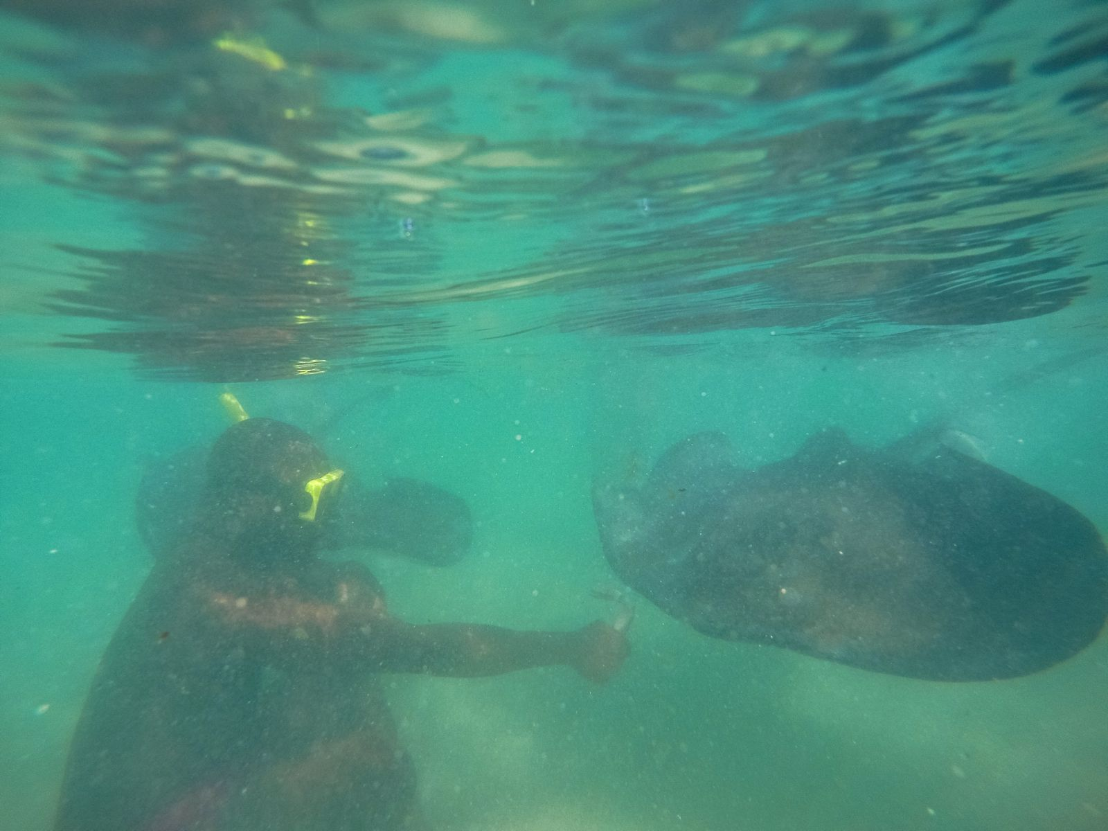 How To Swim With Wild Stingrays In Antigua (17)