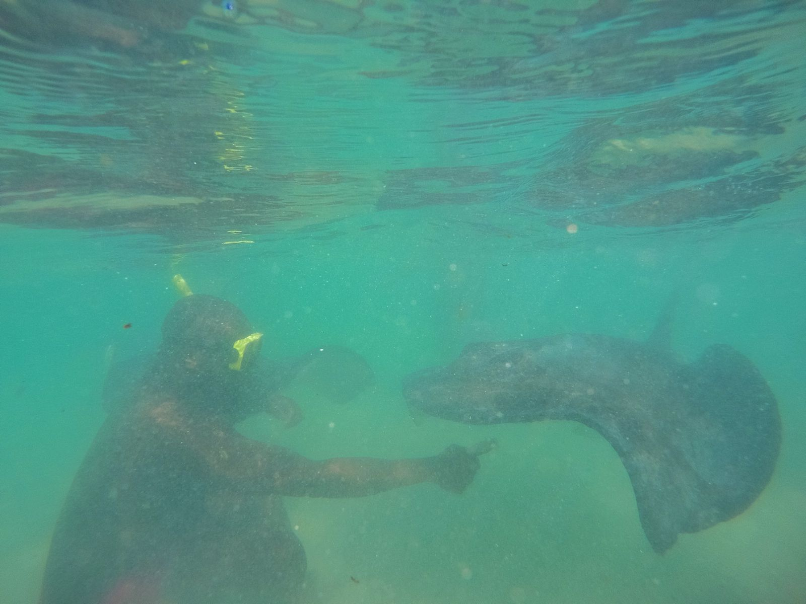 How To Swim With Wild Stingrays In Antigua (16)