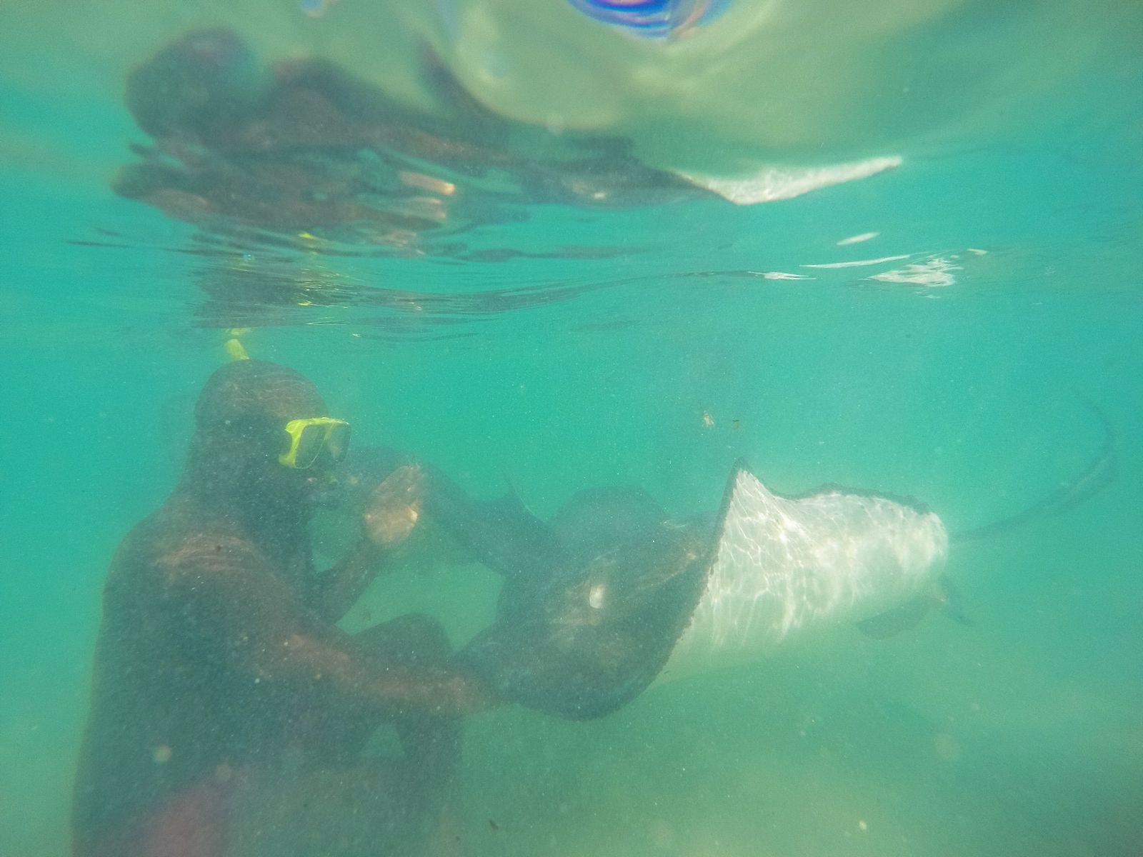 How To Swim With Wild Stingrays In Antigua (14)