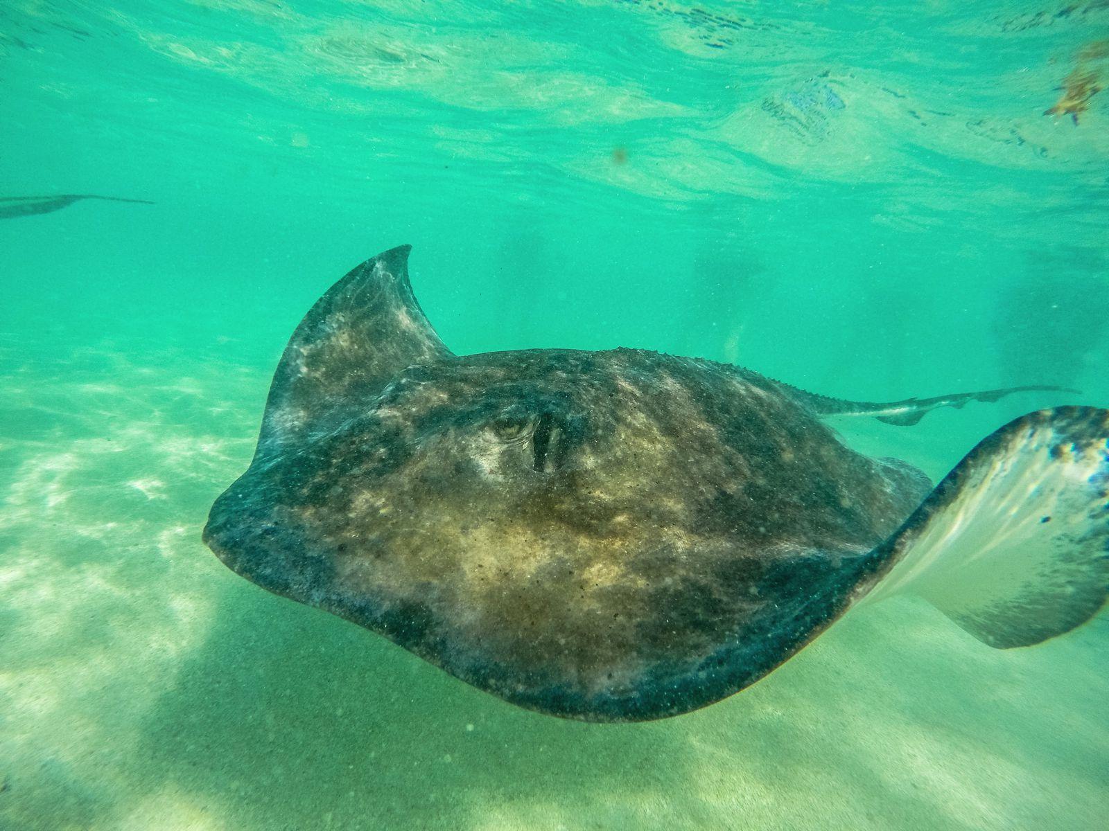How To Swim With Wild Stingrays In Antigua (9)