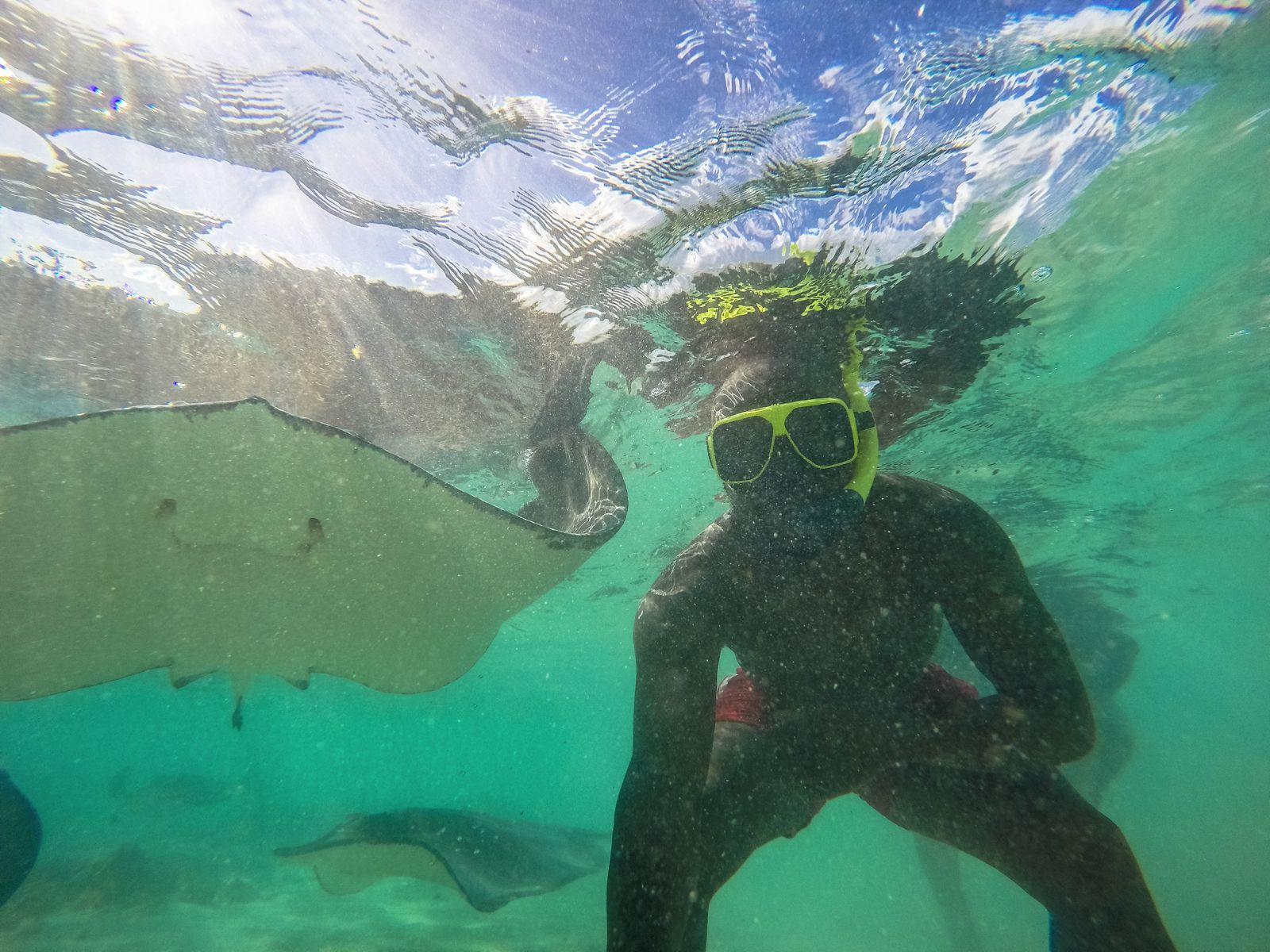 How To Swim With Wild Stingrays In Antigua (7)
