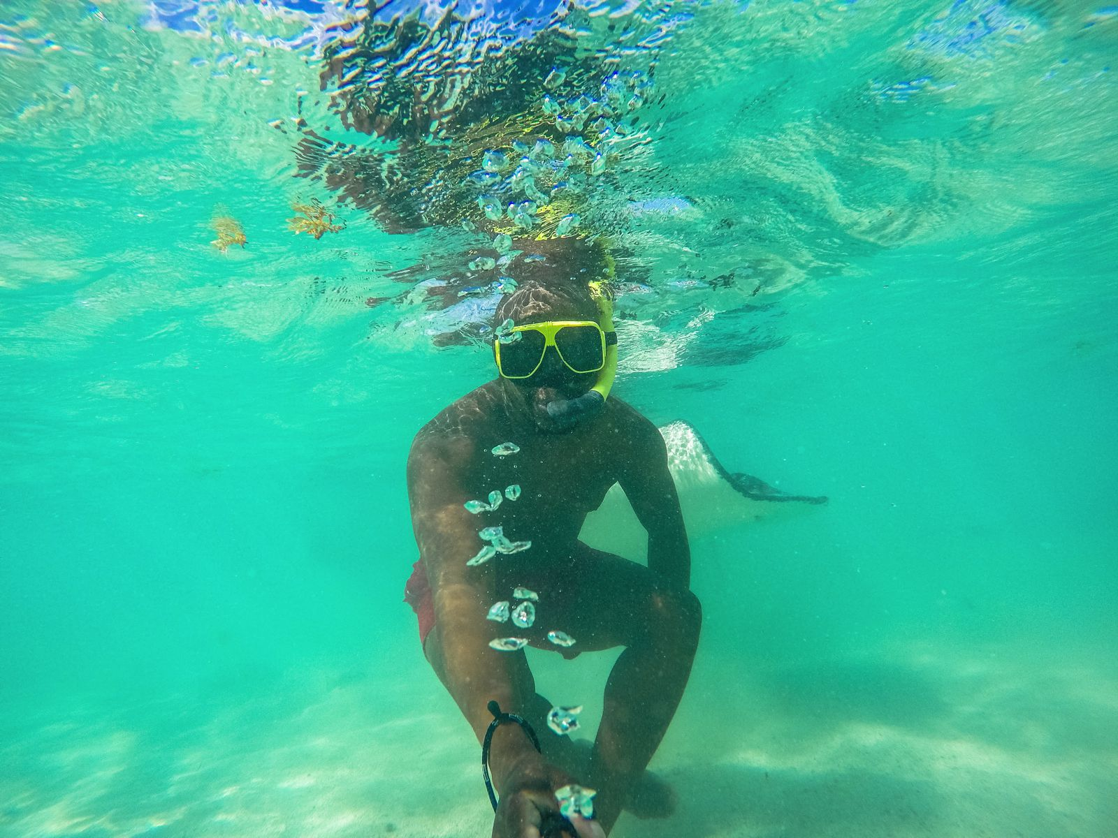 How To Swim With Wild Stingrays In Antigua (6)