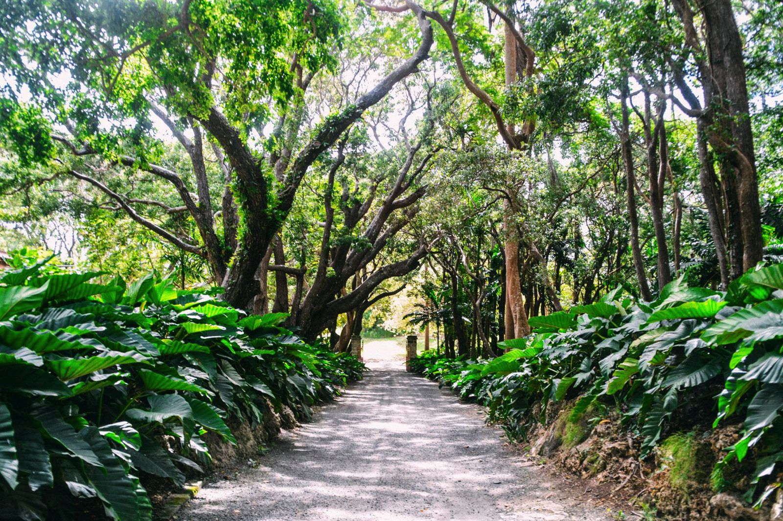 Exploring The Picturesque St. Nicholas Abbey In Barbados (32)