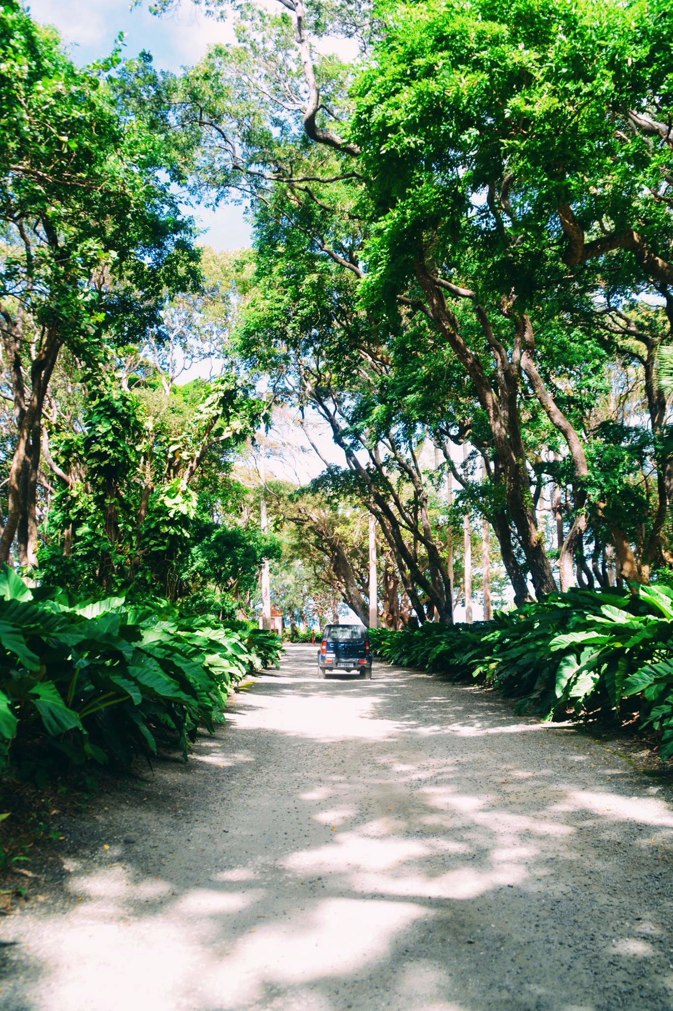 Exploring The Picturesque St. Nicholas Abbey In Barbados (31)