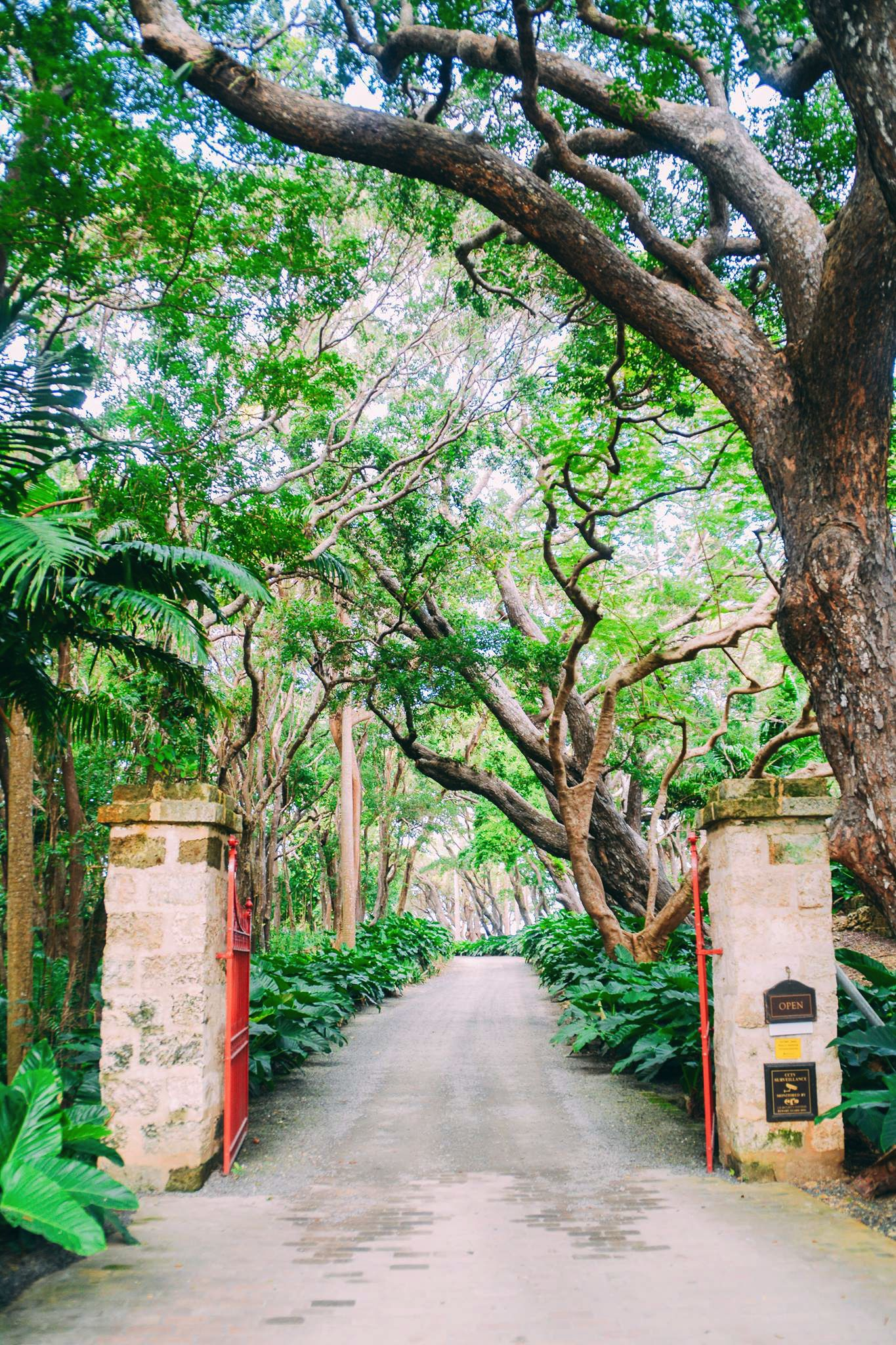 Exploring The Picturesque St. Nicholas Abbey In Barbados (30)