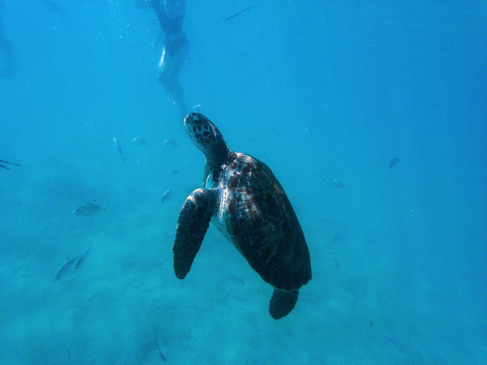 11 Reasons Why You Should Visit Barbados This Year (11)