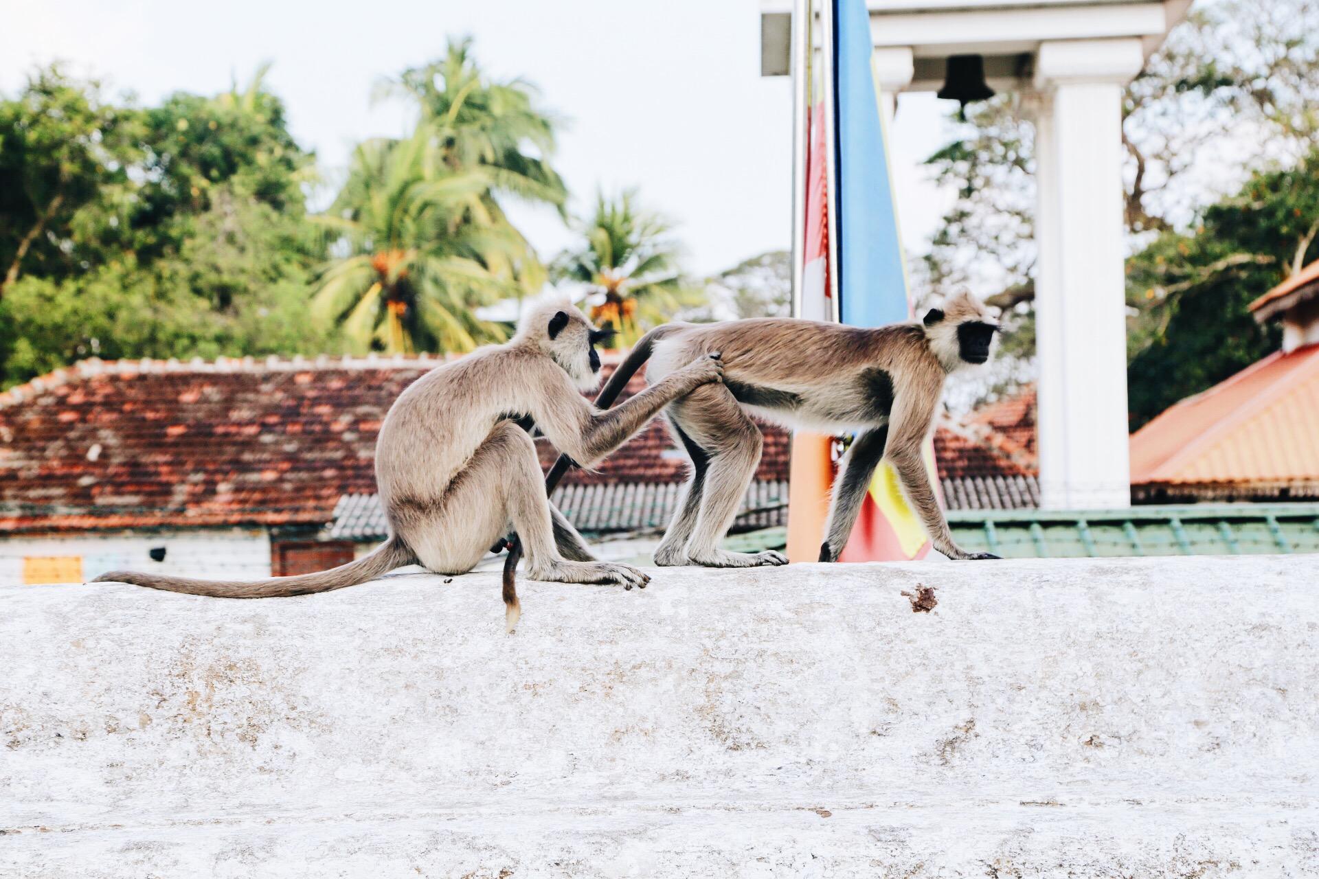 Scenes from Sri Lanka (19)