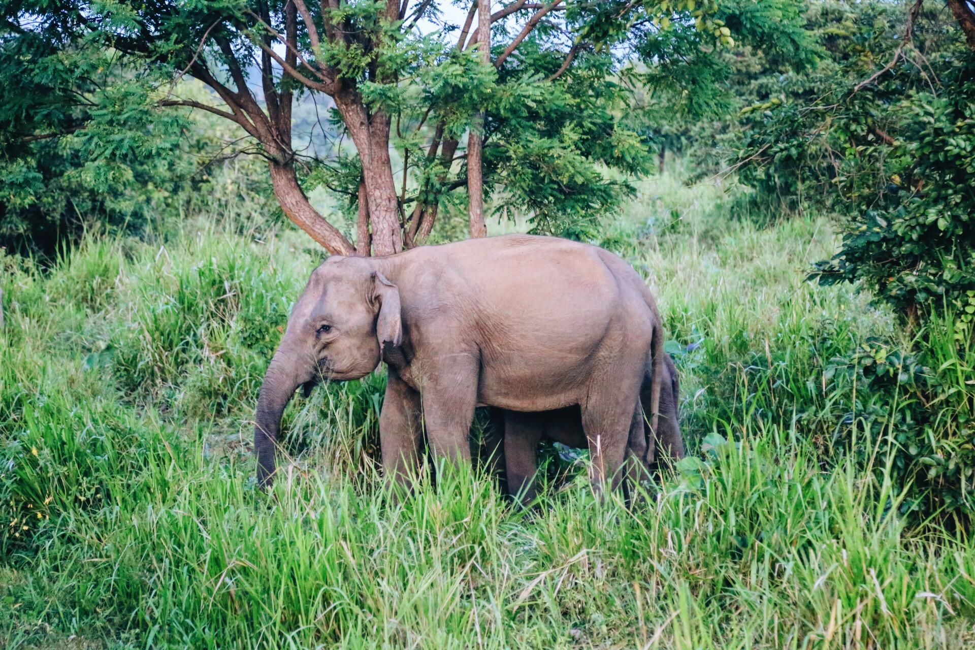 Scenes from Sri Lanka (7)