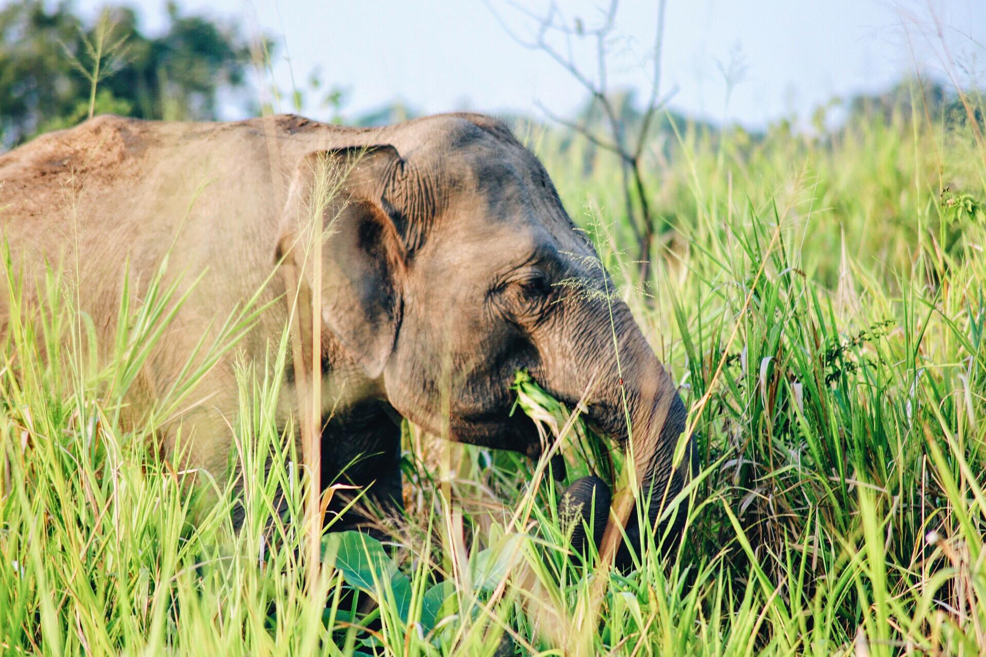 Scenes from Sri Lanka (30)