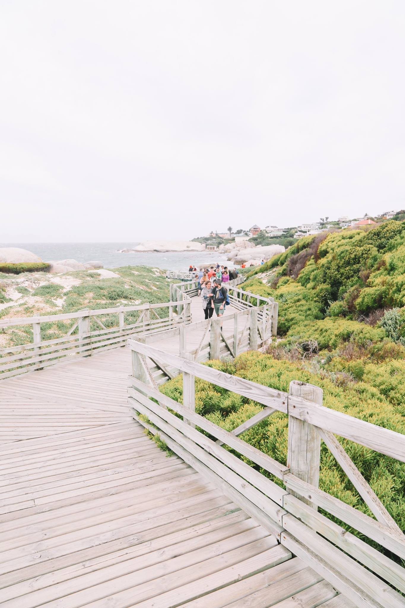 How To Visit Penguin Beach In South Africa (24)