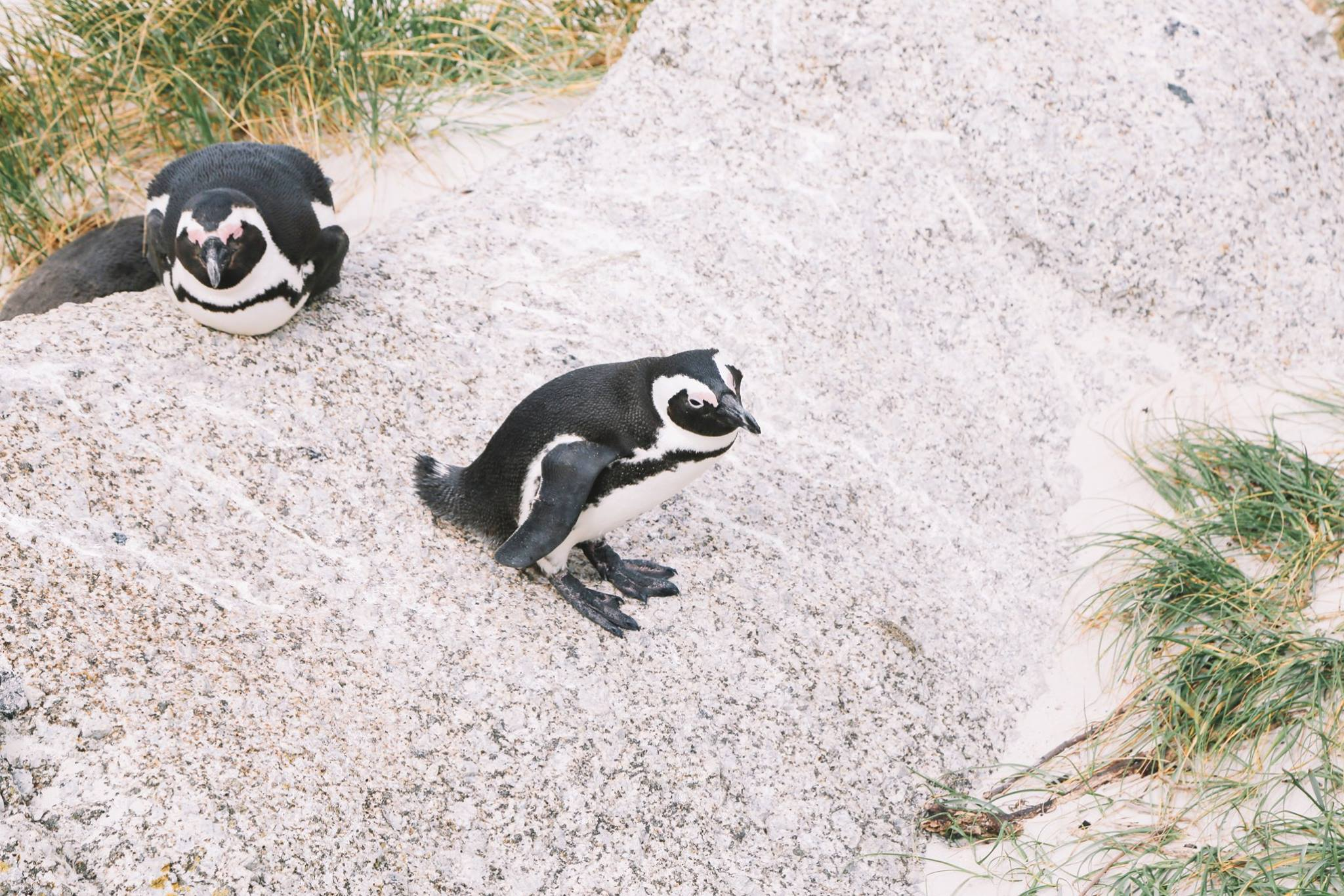 How To Visit Penguin Beach In South Africa (21)
