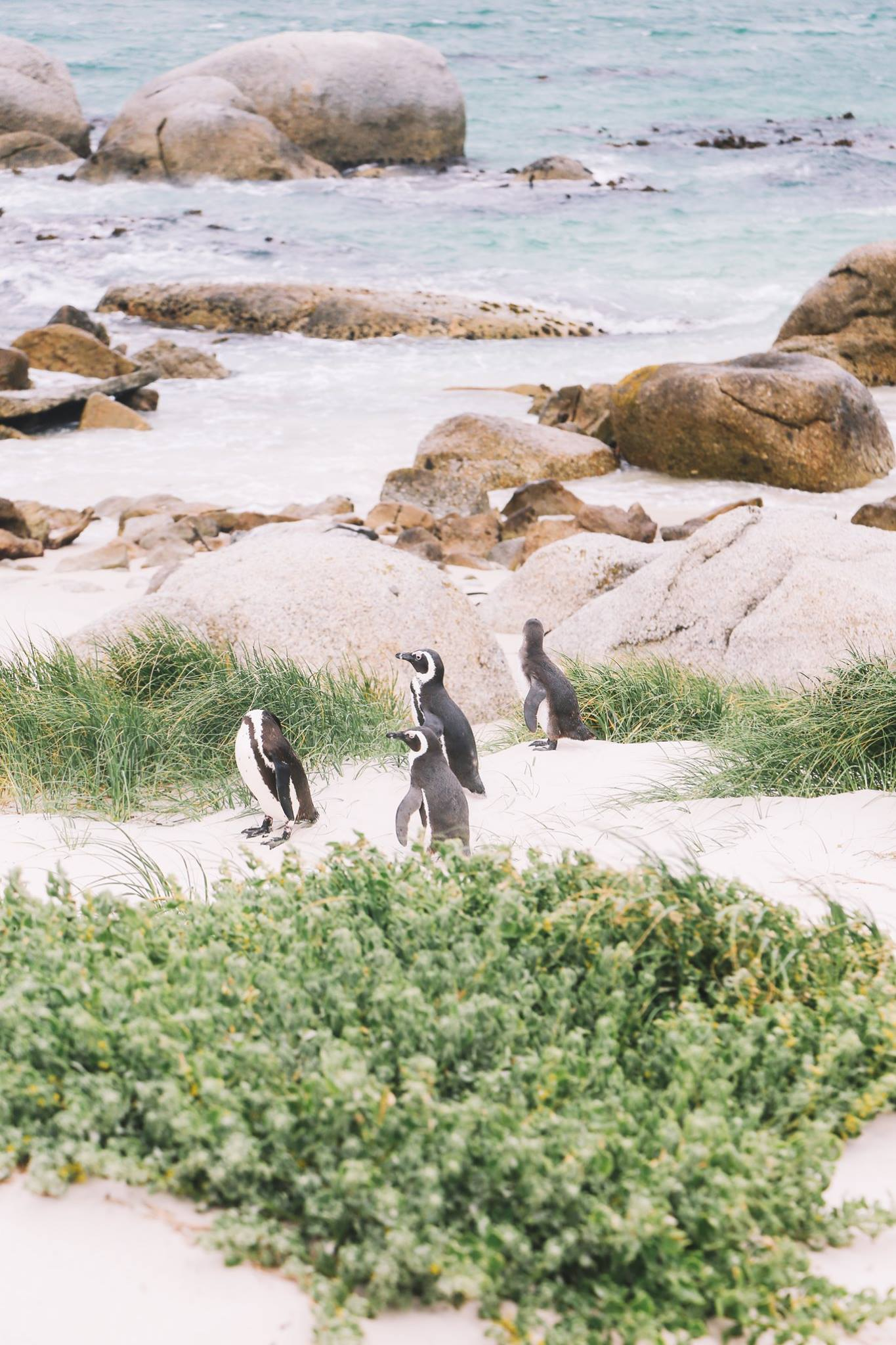 How To Visit Penguin Beach In South Africa (3)